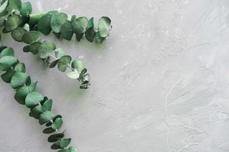 Trendy botanical background with eucaliptus on gray concrete. Interior design style plant decor. copy space for text. minimal desing. top view Banque d'images