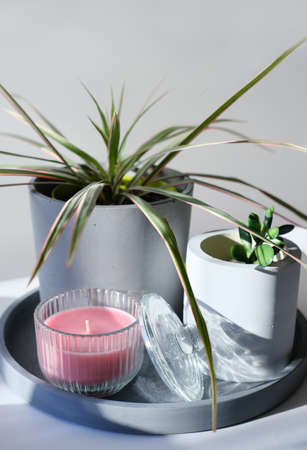 home garden minimal style decoration. flowers in concrete pots and scented candle. flowerpots on a concrete tray. scandinavian style house decor. sunny morning in a room. loft interior.