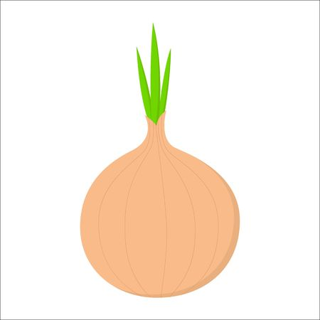 Fresh Vegetable Onion isolated icon. Onion for farm market, vegetarian salad recipe design.  イラスト・ベクター素材