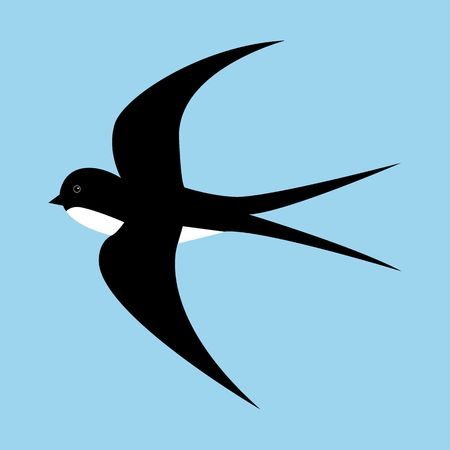 Spring cartoon black and white swallow in motion isolated on blue background.