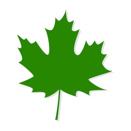 Green maple leaf isolated on white background.  イラスト・ベクター素材