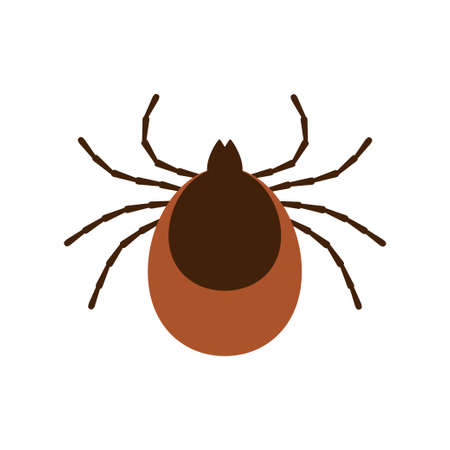 Tick parasite. Sketch of Tick. Mite. Tick isolated on white background. Vector illustration