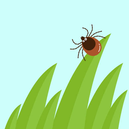 Cartoon mite in the tall green grass flat vector illustration, mite hiding in the grass, tick-borne mite color icon, danger tick bug in nature grass
