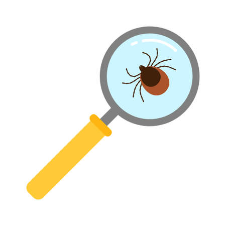 Vector realistic isolated ixodes tick insect with magnifier glass for decoration and covering on the transparent background.