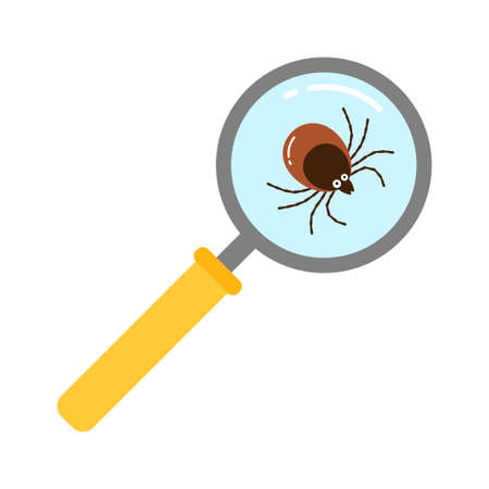 Vector realistic isolated ixodes tick insect with magnifier glass for decoration and covering on the transparent background. Cartoon style