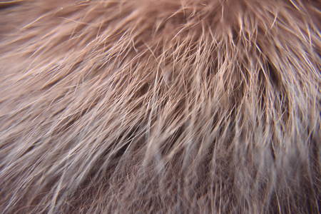closeup look of the red natural animal fur with every single tiny hair visible Imagens