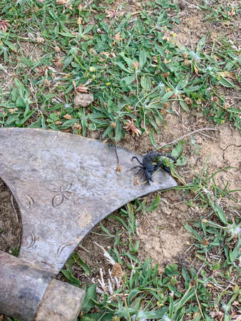 black poisonous scorpion on the ground in natiral environment