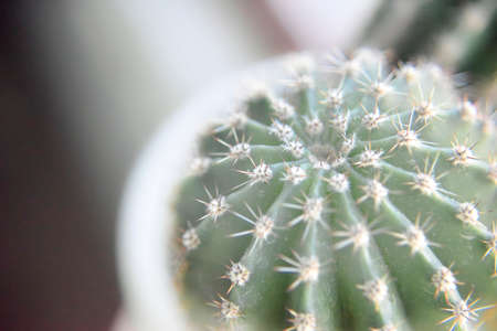 selective focus at the surface of the green cactus from the top Фото со стока