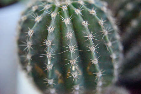 selective focus at the surface of the green cactus Фото со стока