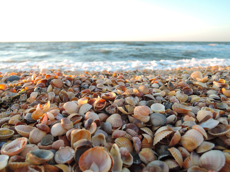 Beautiful seashell beach at sunset by the sea. Banque d'images