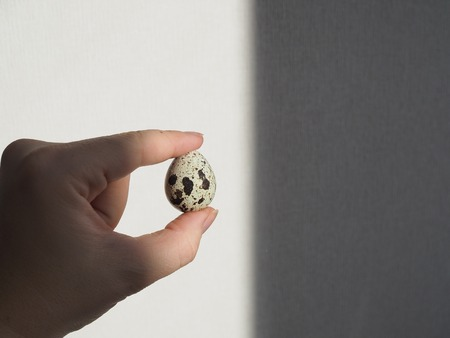 The human hand holds between two fingers a quail egg in specks partially illuminated by a beam of light. Standard-Bild