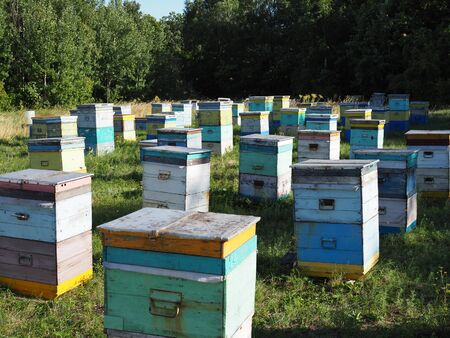 Hives in an apiary with bees flying to the landing boards. Apiculture. Stock Photo