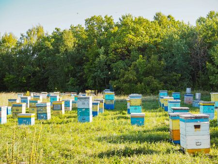 Hives in an apiary with bees flying to the landing boards. Apiculture. Banco de Imagens