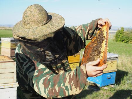 OLYMPUS DIGBeekeeper on apiary. Beekeeper is working with bees and beehives on the apiary.ITAL CAMERA