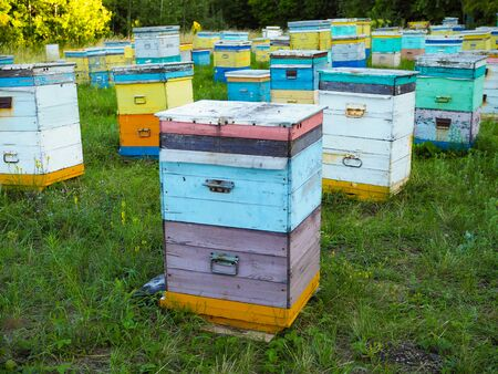 Hives in an apiary with bees flying to the landing boards. Apiculture