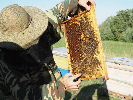 Beekeeper on apiary. Beekeeper is working with bees and beehives on the apiary.. Banco de Imagens
