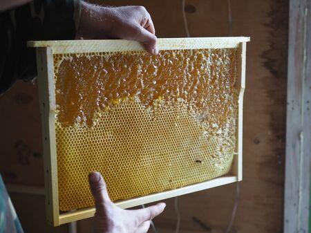 Honeycomb frame half open. Honey in open honeycombs close-up Banco de Imagens
