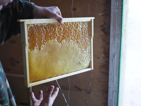 Honeycomb frame half open. Honey in open honeycombs close-up. Banco de Imagens