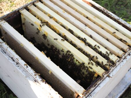 fresh new wooden frames in bee hives on apiary