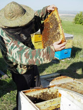Beekeeper on apiary. Beekeeper is working with bees and beehives on the apiary Banco de Imagens