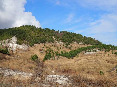 pine forest on the hills in the steppe on a clear Sunny autumn day. Stock Photo