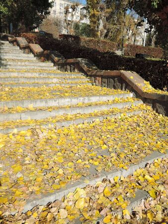 Yellow leaves covered the steps of the Park stairs, stone stairway. Autumn leaf fall.