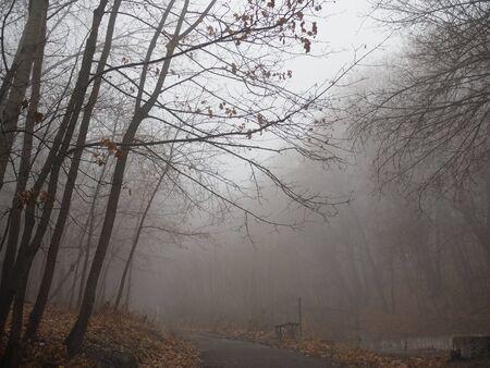 Sentiero che conduce attraverso una foresta nebbiosa alla luce del sole del mattino