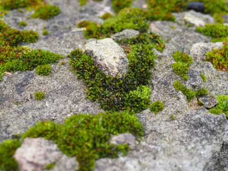 green Moss In Close-up Shot. variable focus. Reklamní fotografie - 133839366