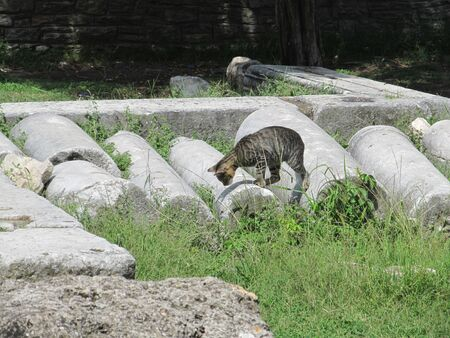 cat walks through the ruins of an ancient Greek temple on the island of Thassos. Reklamní fotografie