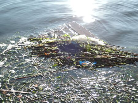 pollution of the reservoir, plastic mixed with algae on the coastal strip.