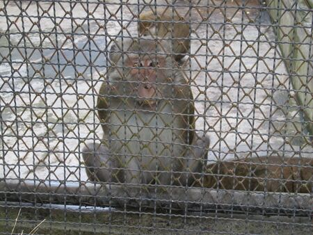 A monkey sits in a zoo behind bars Stock fotó