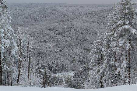 beautiful view of the winter forest and tree tops from the mountain slope.