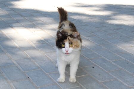 Beautiful calico cat on a tile on the street.