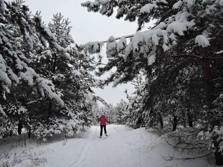 A woman is skiing in the woods winter park