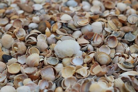 Many small shells close-up lying on the beach on a summer day.