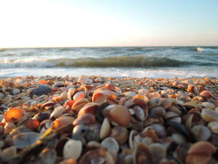 Beautiful seashell beach at sunset by the sea