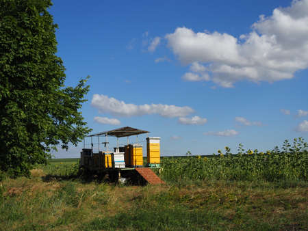 colorful beehives in sunflower field in Provance, France 版權商用圖片