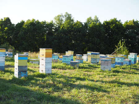 Colorful hives with bees on a meadow in an idyllic mountain region pollinating the blossoming flowers 版權商用圖片