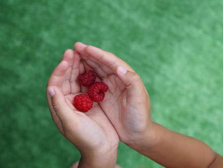 little baby hands and ripe raspberry berries against green grass 版權商用圖片