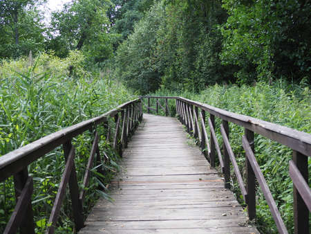 Wooden bridge trough the forest in a nature park. The concept of ecotourism