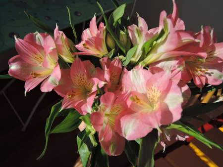 Alstroemeria flower in the sunlight closeup.