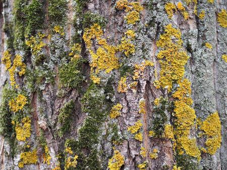 green moss on a tree trunk. autumn tree