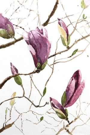 Magnolien Standard-Bild - 18520159
