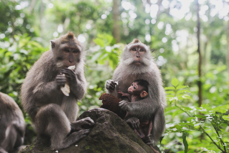 humid south: monkeys in the rainforest Stock Photo
