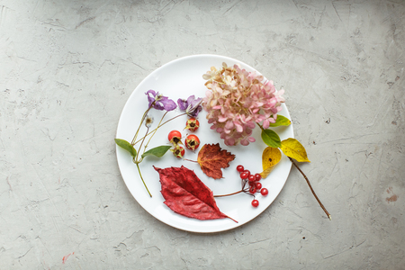 dried flowers: Autumn herbarium in plate: dried flowers, berries and leaves