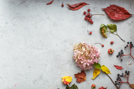 flores secas: herbario de otoño: flores secas, bayas y hojas