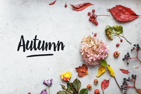 Herbst Herbarium: getrocknete Blumen, Beeren und Blätter Standard-Bild - 66543954
