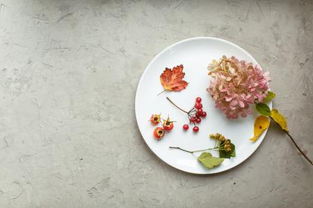 flores secas: Otoño en el herbario de la placa: Flores secas, bayas y hojas