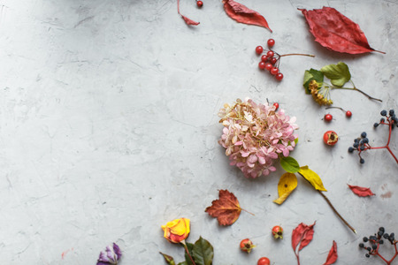 dried flowers: Autumn herbarium: dried flowers, berries and leaves