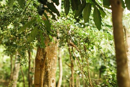 tropical landscape in Bali, jungle in Asia Stock Photo